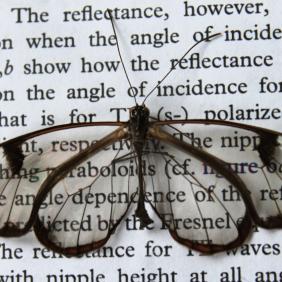 The Glasswing Butterfly